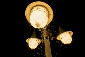 light bulb that doesn t attract bugs true or false do led lights attract bugs ledified