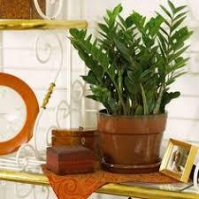 low light plants for bedroom indoor plants for low light prayer plant night prayer and sunlight
