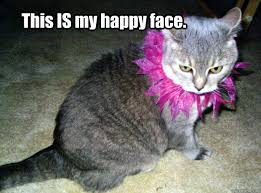 Happy Cat Meme - this is my happy face happy cat quickmeme