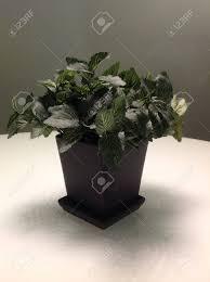 plante verte bureau plante verte comme décoration de bureau banque d images et photos