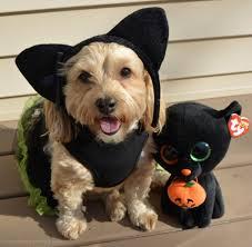 black cat yourdesignerdog
