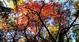 sunday stills trees soletusknow