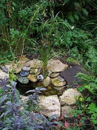 Frog Pond Backyard Best 25 Small Ponds Ideas On Pinterest Small Backyard Ponds