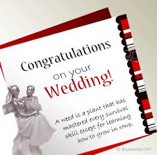 wedding wishes speech wedding speech quotes like success