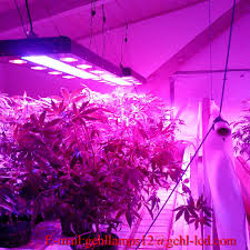 best grow lights on the market led light design kind led grow light review cannabas 6 inch led