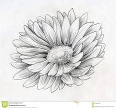 daisy flowers tattoo drawing photos pictures and sketches