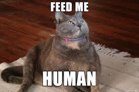 Feed Me Meme - feed me human jabba the catt meme on imgur