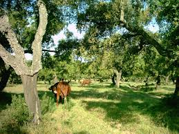 ranch wikipedia