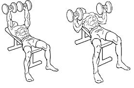 Flat Db Bench Muscle Building Program I Markymarks Fitness