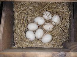 backyard egg options florida hillbilly