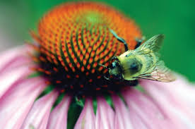 native plants massachusetts support pollination and plant a buzzworthy garden the