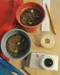 plant phototropism experiment science project education com