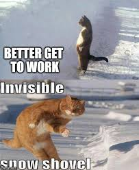 Shovel Meme - the life of a cat imgflip
