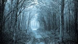 Way To Winter Forest Mystical Path Forest Winter Blue Grey Hue Way