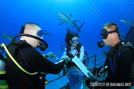 underwater wedding 50 couples targeted for world record underwater wedding attempt in