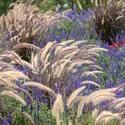 Gardening Zones Uk - hardiness zones in the united kingdom