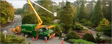 bradley tree service welcome