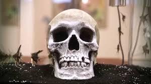 Okeanos Aquascaping Isolate Skull Edition By Okeanos At Avant Art Gallery Miami