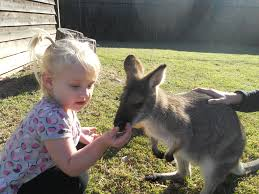 koala barfblog