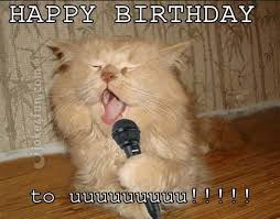 Birthday Meme Cat - 20 cat birthday memes that are way too adorable