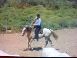 chambre d hote dans une manade en camargue le gardian de la manade de taureaux et chevaux photo de bateau de