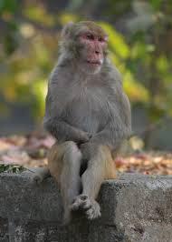 monkeys of mumbai the drinking bird