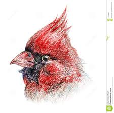 isolated bird colored pencil drawing royalty free stock photos