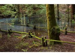 California Nature Activities images Redwoods rivers outdoor activities sonoma county official site jpg