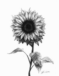 coloring cute drawing sunflower tattoos coloring