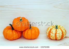small pumpkins mini pumpkins stock photo 15619414