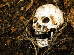 in front of human skull buried in the soil with the roots of the