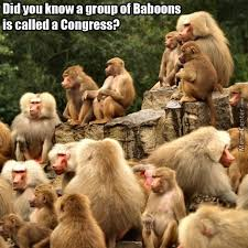 Baboon Meme - baboon memes best collection of funny baboon pictures