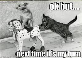 Funny Cat And Dog Memes - funny dog and cat photos with captions motley dogs