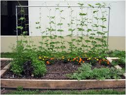 Small Kitchen Garden Ideas Backyards Fascinating Small Vegetable Garden Ideas Backyard