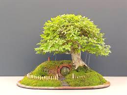 8 best beautiful home interiors with unique bonsai ornamental