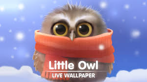 little owl live wallpaper youtube