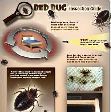 Biscuit Beetle In Bedroom 16 Best Bed Bugs Gross Images On Pinterest Bed Bug Remedies