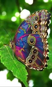 120 beautiful butterflies amazing blue butterfly