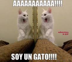 Gato Meme - soy un gato meme subido por slendertroll memedroid