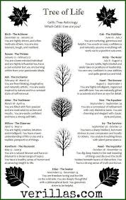 best 25 tree of meaning ideas on where did