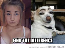 Eyebrows Meme - humor funny eyebrows dog meme on imgfave