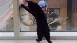 The Best Window Cleaner Cat And Window Cleaner Become Best Friends After Months Of Meeting