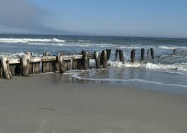tips to find vacation rental in folly beach sharks best travel sites