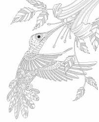 hummingbird zentangle coloring pages colouring detailed