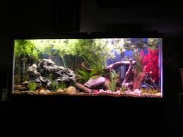 Aquarium Decoration Ideas Freshwater 55 River Tank Cichlids Com My 55 Gallon Malawi Cichlid Tank