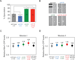 synergistic control of kinetochore protein levels by psh1 and ubr2