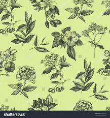 botanical wrapping paper pattern botanical plant sketches seamless fabric stock vector