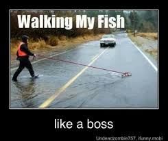 Fly Fishing Meme - funny fishing memes bass fishing texas fishing forum