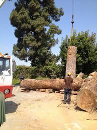 mega tree removal 818 773 7571 tree services tree trimming