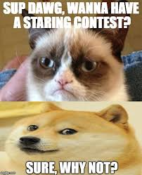 Sup Dawg Meme - staring contest imgflip